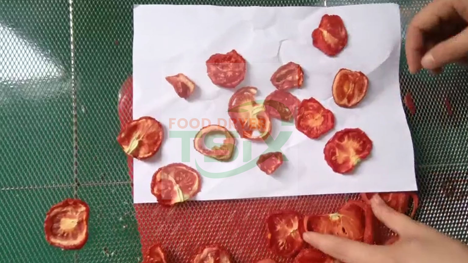 Machine commerciale de déshydrateur de tomate de machine de séchage de tomates TSIX 300kg -DPHG030S-G